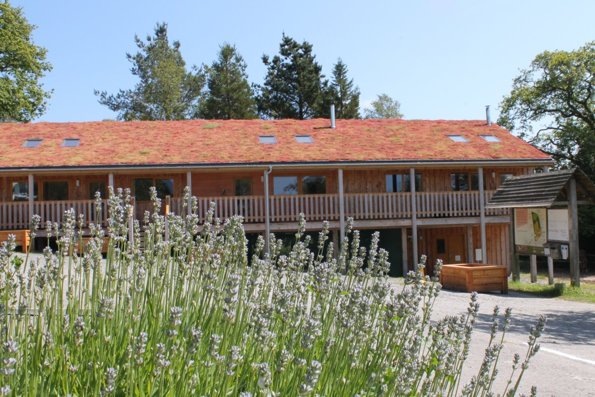 Big Group Eco Lodge In Lampeter Ceredigion