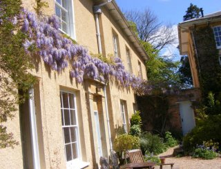 Wisteria on the patio at Tone Dale House