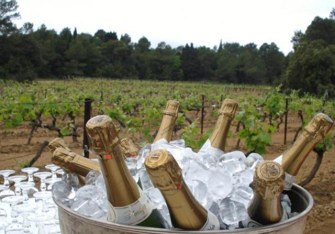 A celebration in the vineyards!