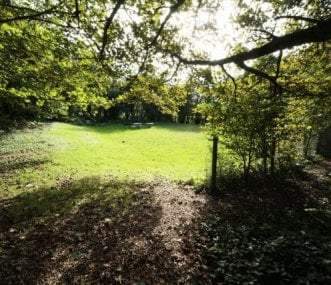 Sun Trap Opening in the Copse. Play, BBQ, Campfire