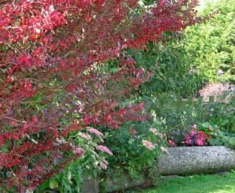 Autumn colours in our garden