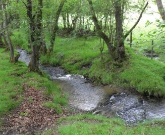 The Rhy-d-hir Brook in our field