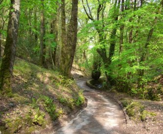 Walks in the acient woodland to & from The Cleeve.