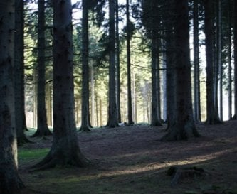 Hawkhirst is set in 70 acres of forest.
