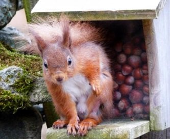 Cyril the squirrel at one of our feeders!