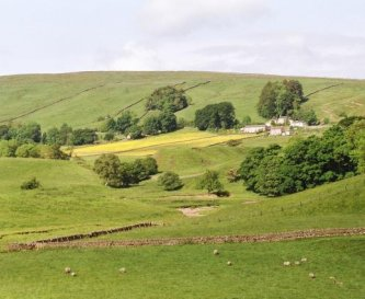 Hay Meadows from across the valley