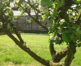 Enclosed Orchard garden ideal for children or dogs