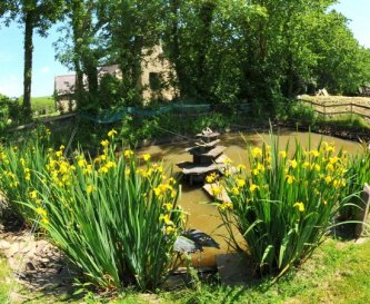 Wild Life Pond