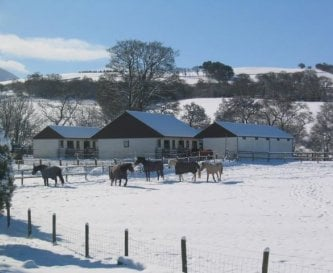 Happy Horse Retirement Home at Blaencrai