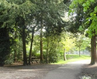 Wooded area with picnic bench