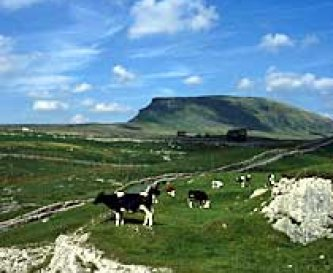 Local area - Ingleborough